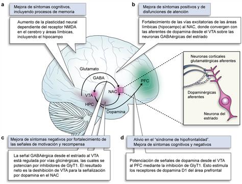 donde se encuentra solfa syllable serotonina linear unit el cerebro